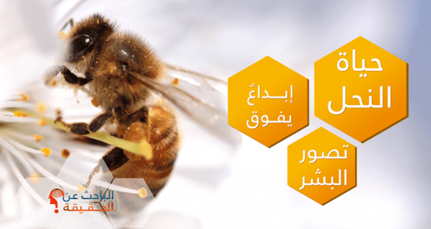 حياة النحل.. إبداعٌ يفوق تصور البشر 10636897_749363271778993_3928253320390577934_o-620x330