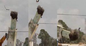 فيديو مؤثر..هدم عش لقالق على صومعة يثير استنكار المغاربة عبر مواقع التواصل الإجتماعي