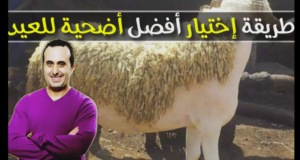 الدكتور نبيل العياشي يقدم طريقة اختيار أفضل أضحية للعيد